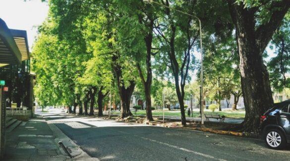Árboles - Espacios verdes