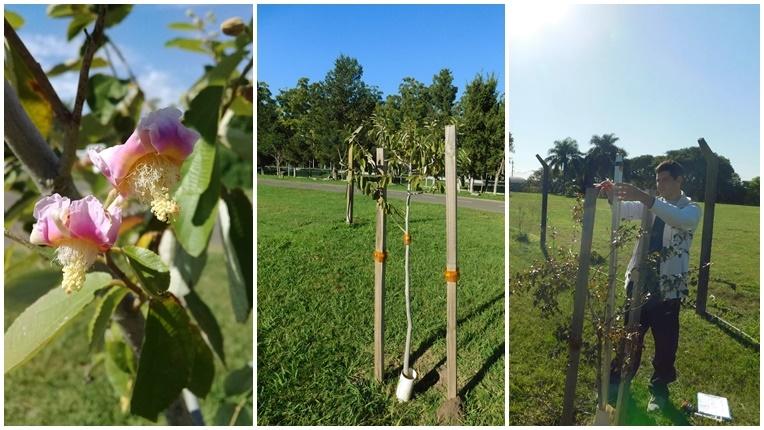 Jóven plantando árbol - Plantas - Espacios verdes