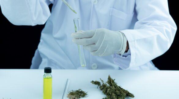 Laboratorio científico - Cannabis - Investigación
