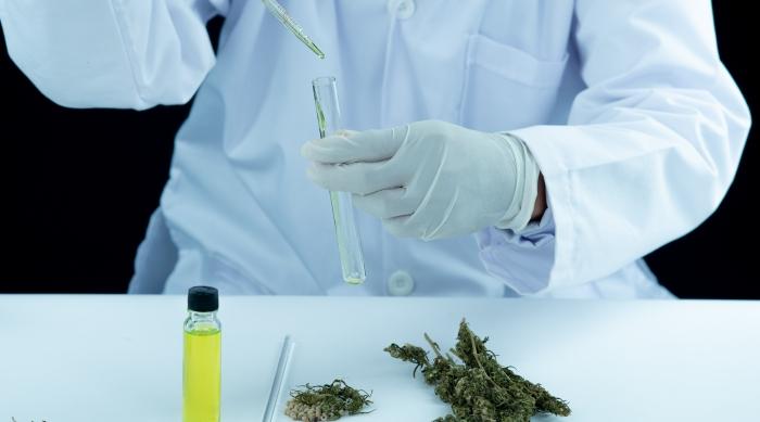 El camino de la investigación en cannabis