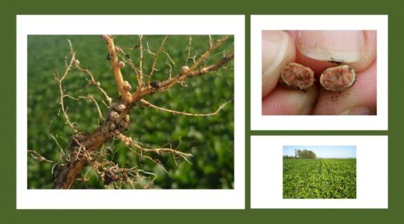 Producción agrícola - Mano sostiene semillas - Plantación