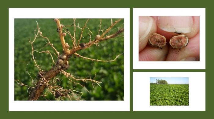 Producción agrícola sin dañar el medioambiente