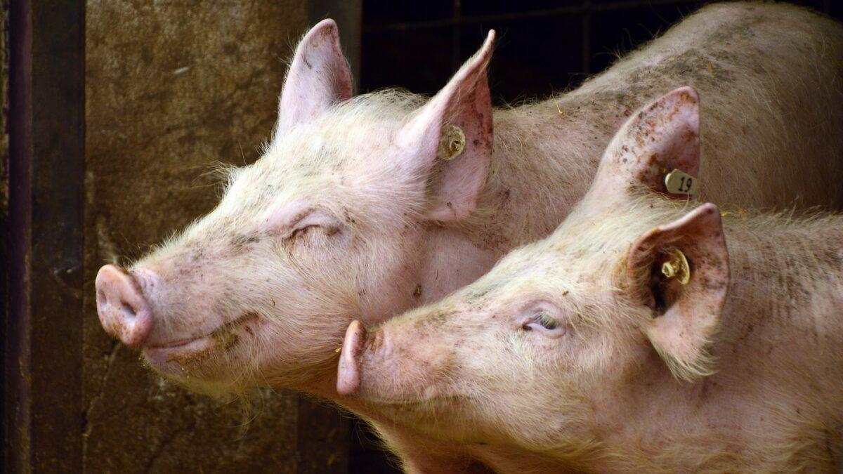 Investigación sobre zoonosis parasitaria