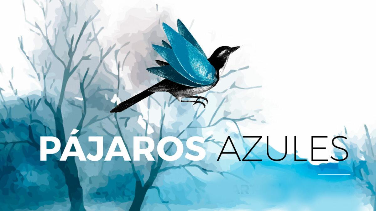 Pájaros Azules T03
