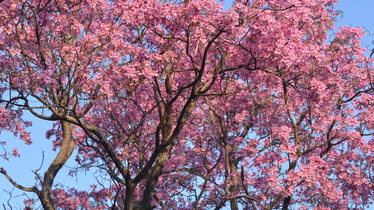 El color de la primavera litoraleña